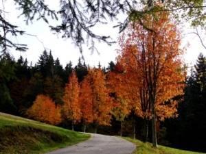 podzim na Orlu